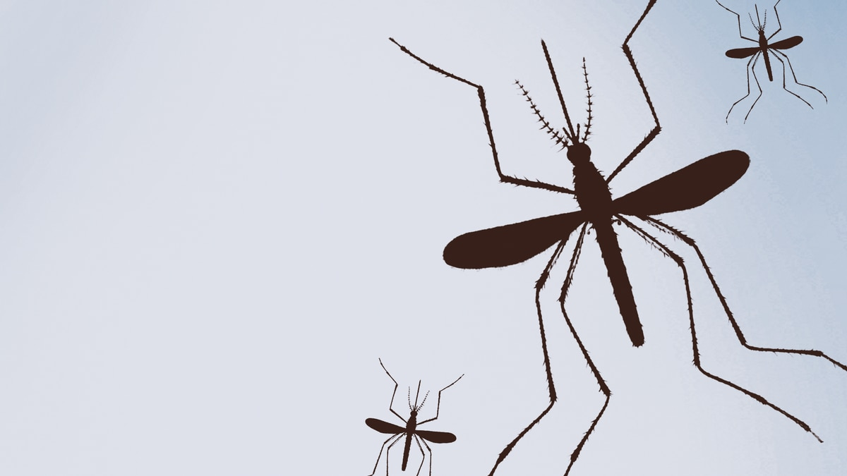 Mosquito tests positive according to Mesa County Public Health