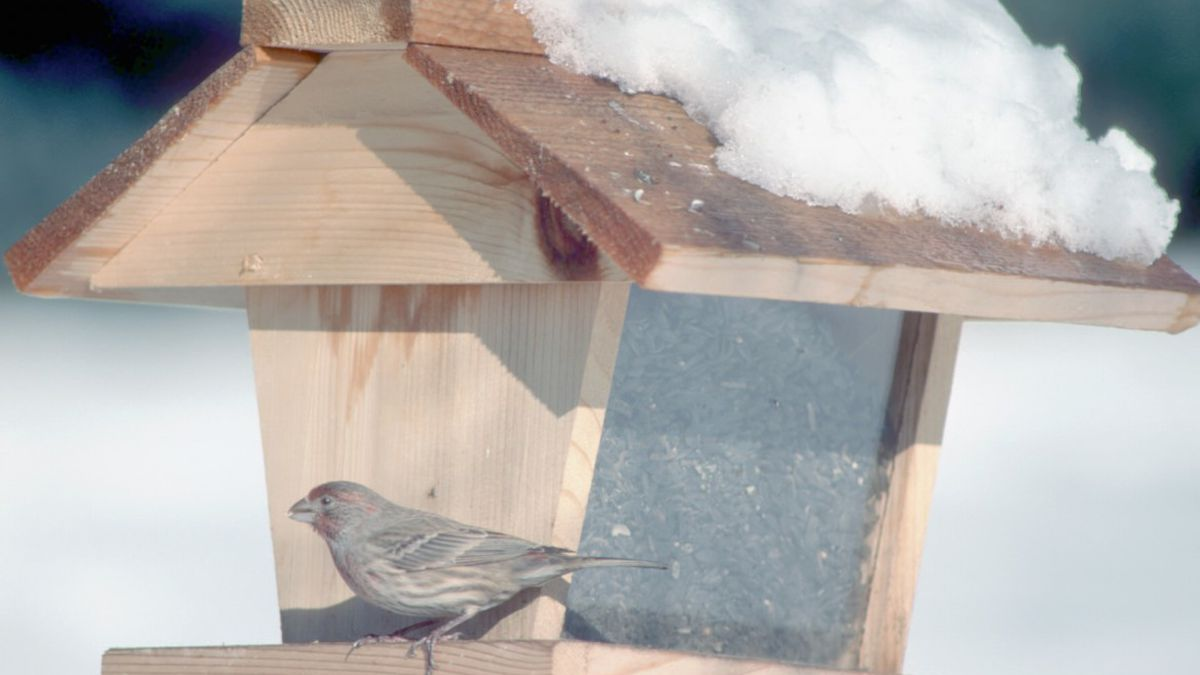Idaho fish and wildlife officials are recommending that residents take down their backyard bird...