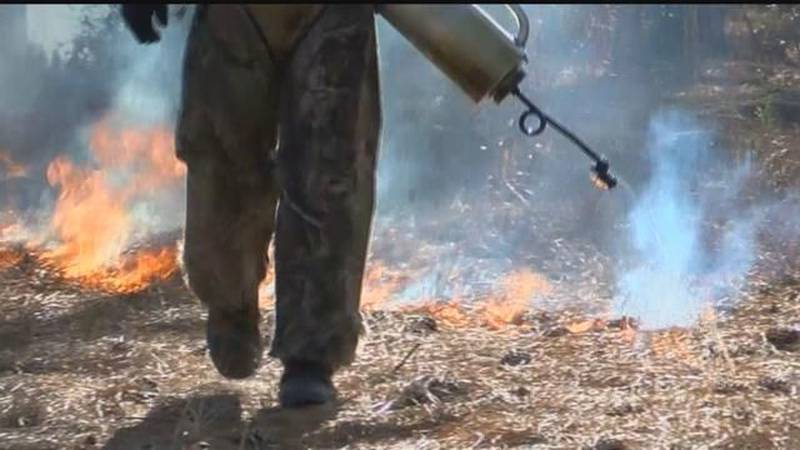 The Salmon Challis National Forest will begin controlled burns in Northern Idaho starting Oct....