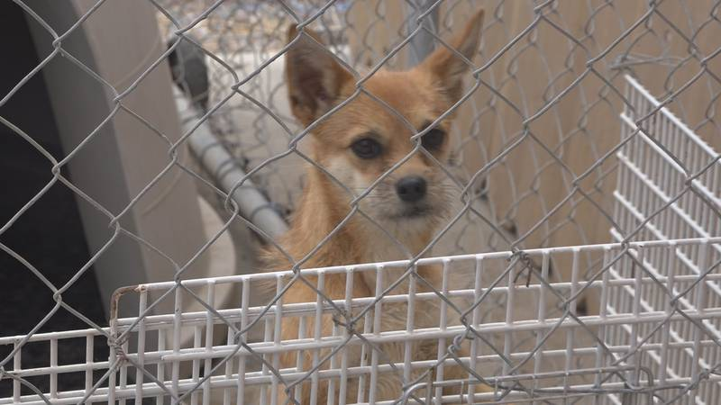 Officials are sharing the best ways to handle noisy dog complaints, and with the Fourth of...