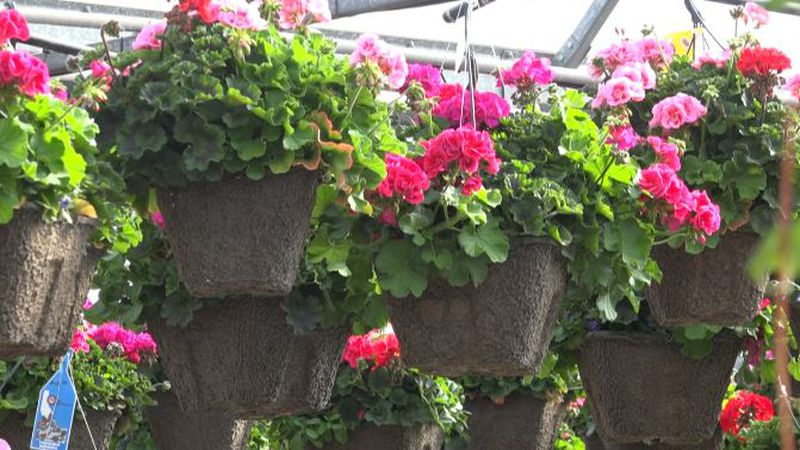 More than 1,000 flowers will be donated to senior citizens in the Magic Valley.