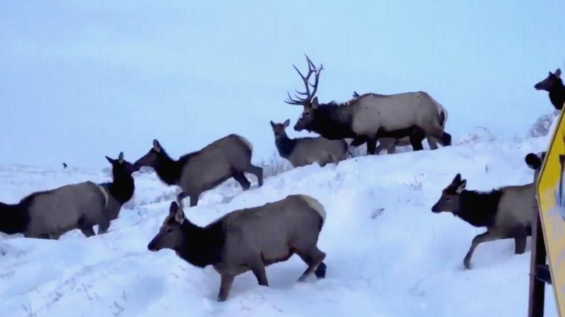 """Big game harvest numbers up across Idaho. """"We're really in the second golden age of elk hunting..."""