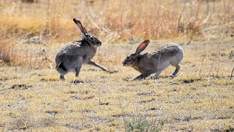 Rabbit Hemorrhagic Disease, or RHD for short, is a deadly disease that affects animals in the...
