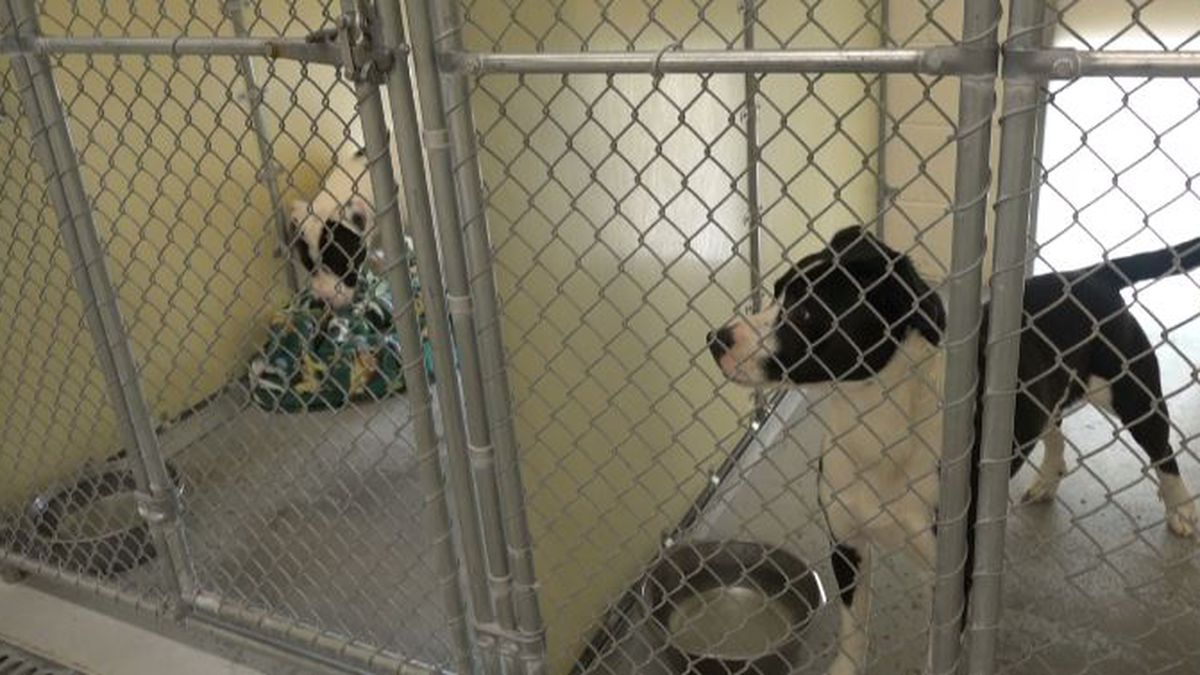 Dog owners have until Jan. 31 to license their dogs (Source: KMVT).