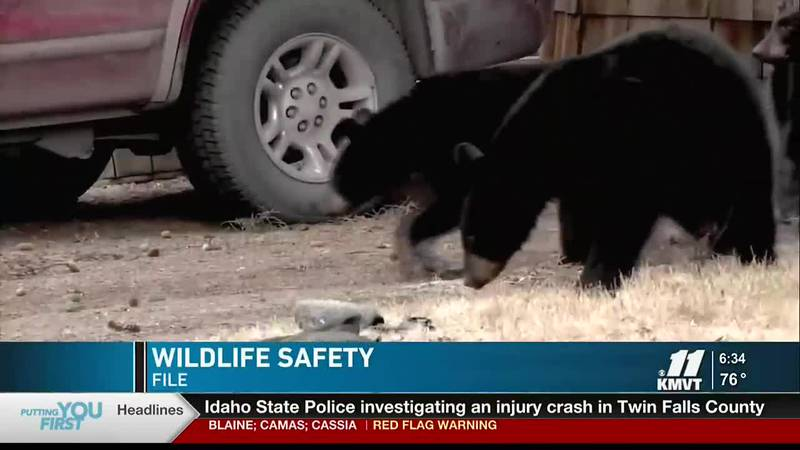 Idaho Fish and Game say the hot and dry weather could draw wildlife down from the mountains to...
