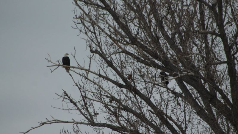 The Eagle Tree in Wendell is a popular spot for residents and tourists to come to visit. During...