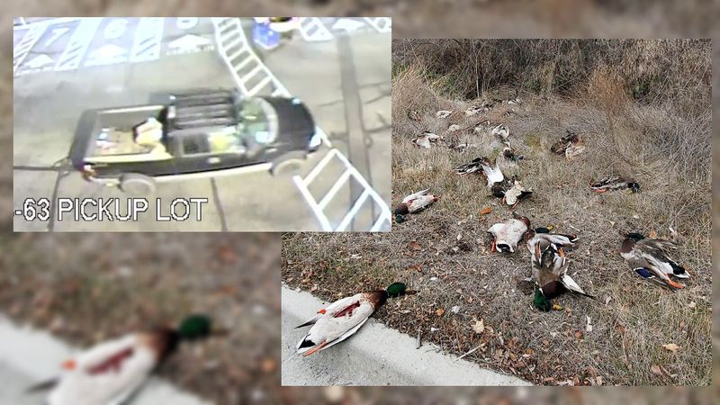 A western Idaho Fish and Game officer seeks information after 34 waterfowl carcasses were...