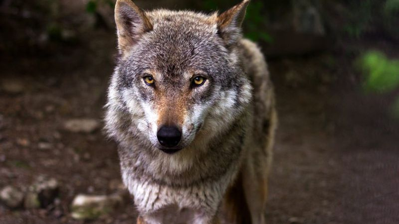 The Center for Biological Diversity is requesting Idaho be deemed ineligible for funding under...