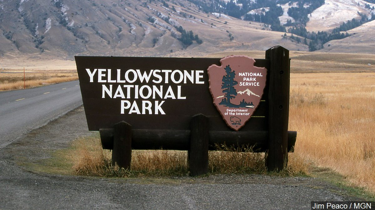 Forest Service delays logging project near Yellowstone park