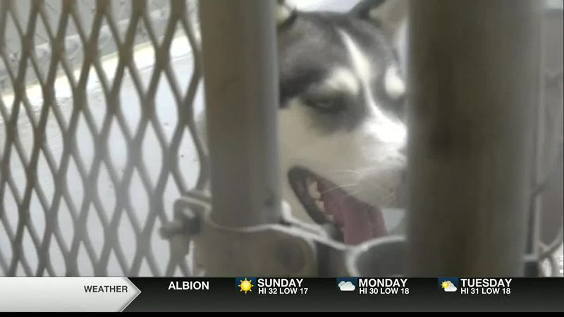 The Jerome Animal Shelter is breathing a sigh of relief on Saturday, as the majority of their...
