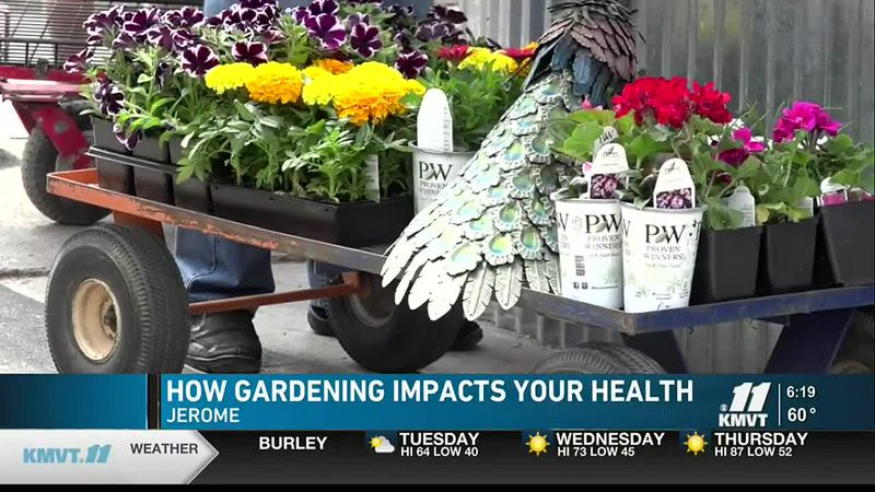 Gardening impacts your health and is used in therapies and rehabilitation.