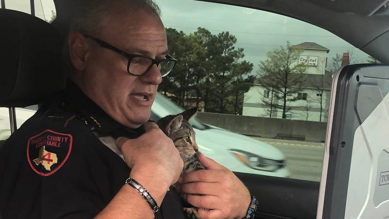 The cat was found on the main lanes of the freeway.