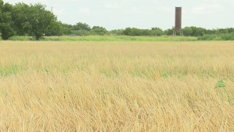 Yields for barley and wheat grown in Idaho set records last year, but this year spring and...