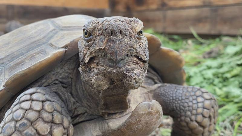 One of the only reptile rescue organizations in the Magic Valley is seeking public opinion and...