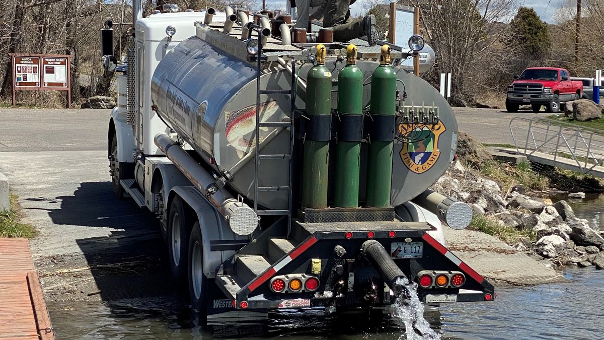 A Fish and Game hatchery truck stocks rainbow trout to provide fishing opportunity to anglers.
