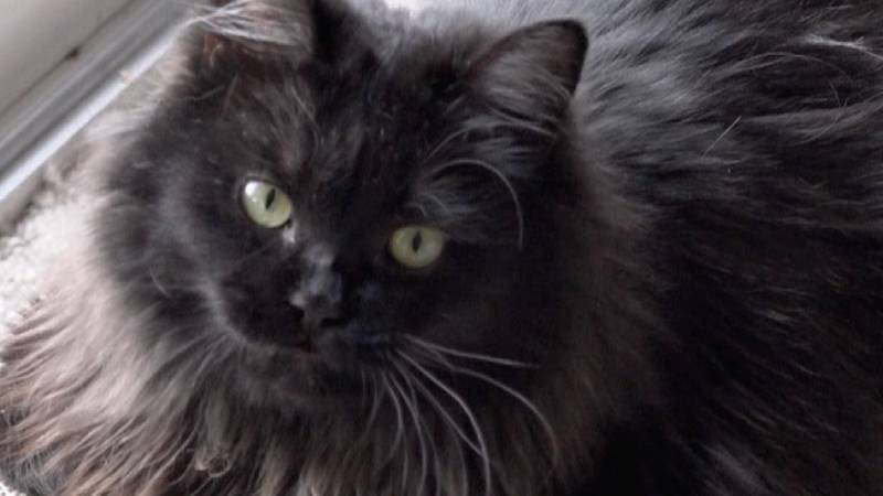 The Twin Falls Animal Shelter is reporting many cats missing in the Buhl, Kimberly, and Twin...