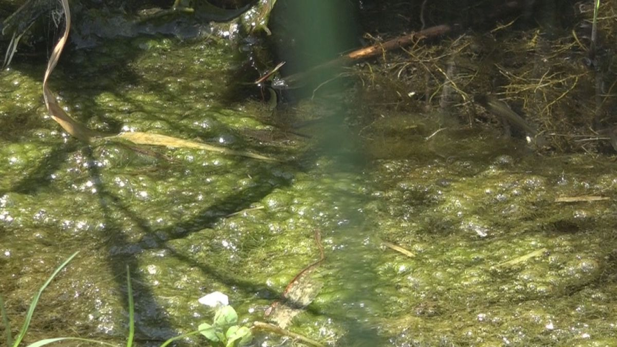 Regional health and state water quality agencies warn residents about toxic algal blooms found at south central Idaho reservoirs.