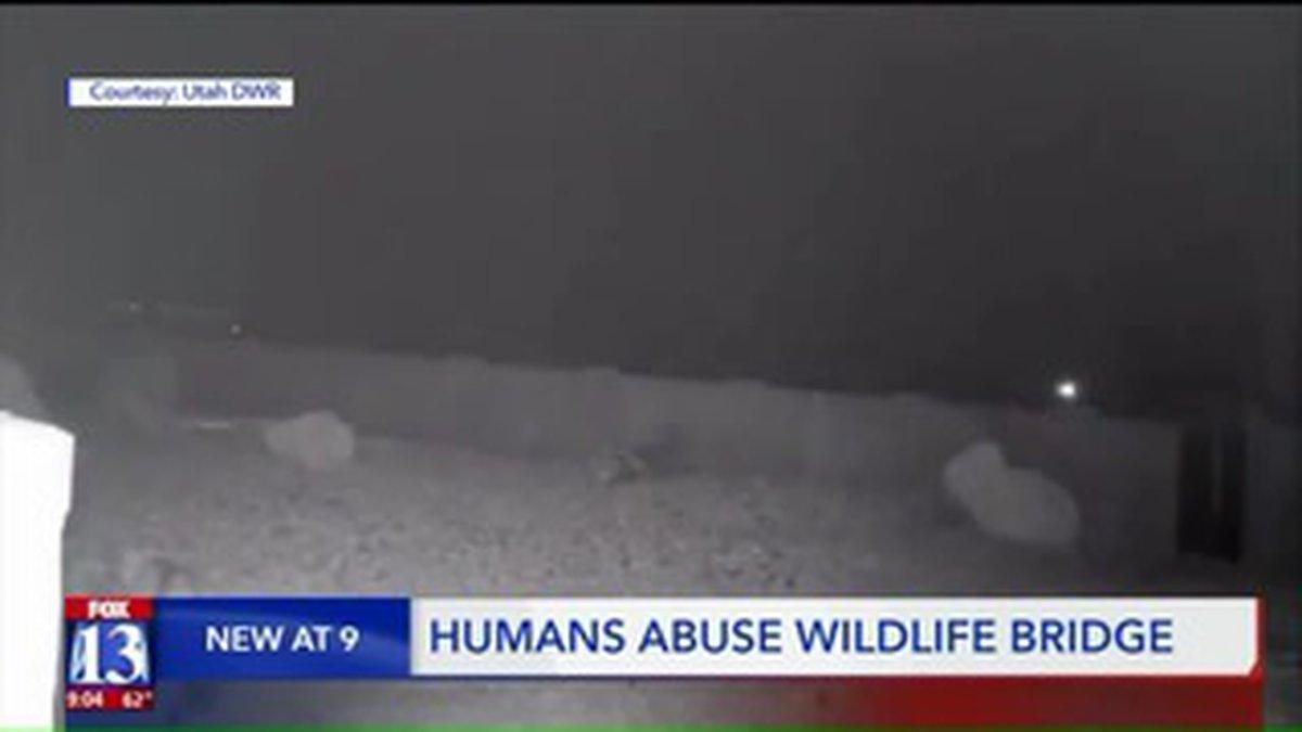 Image of wildlife crossing from KSTU/CNN VAN