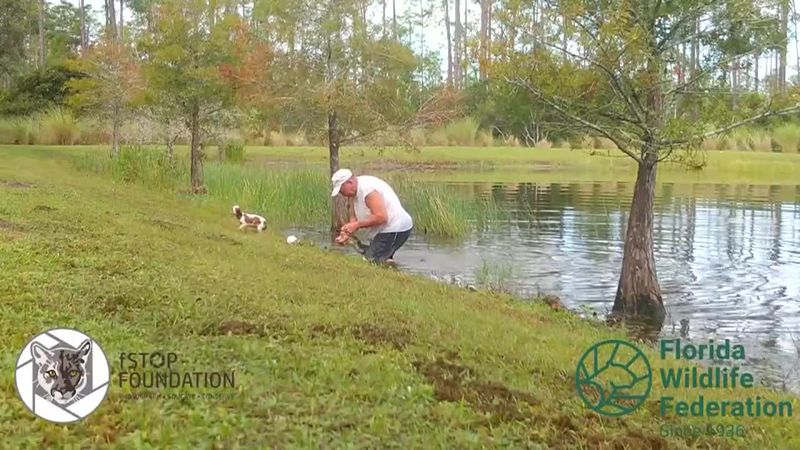 He didn't think twice before he jumped into the water, wrestling the alligator to save his...