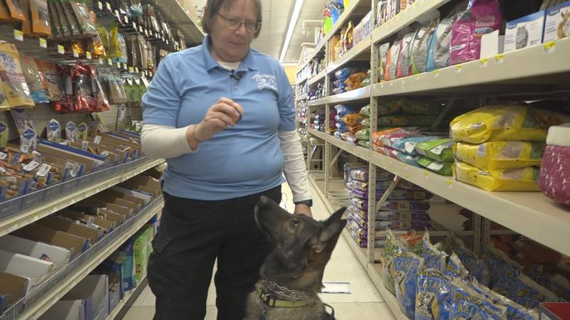 A Mini-Cassia cadaver dog and her handler are raising money for new training in order to...